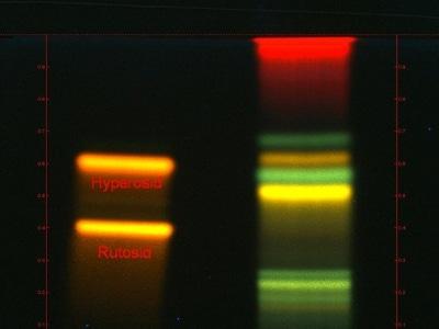 DC-Chromatogramm zur Bestimmung der Identität